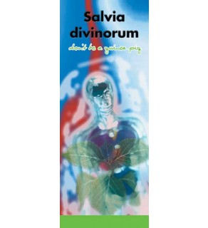 """In the Know -""""Salvia Divinorum: Don't be a Guinea"""