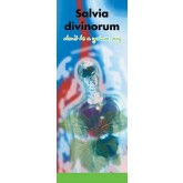 In the Know: Salvia Divinorum, Don't be a Guinea Pig Pamphlet